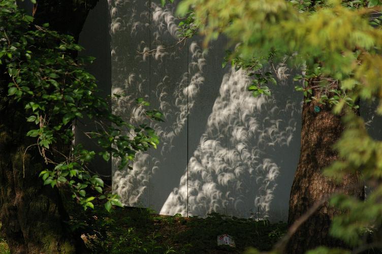 20120521_日食4.jpg
