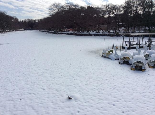 20140209大雪の翌朝2.jpg