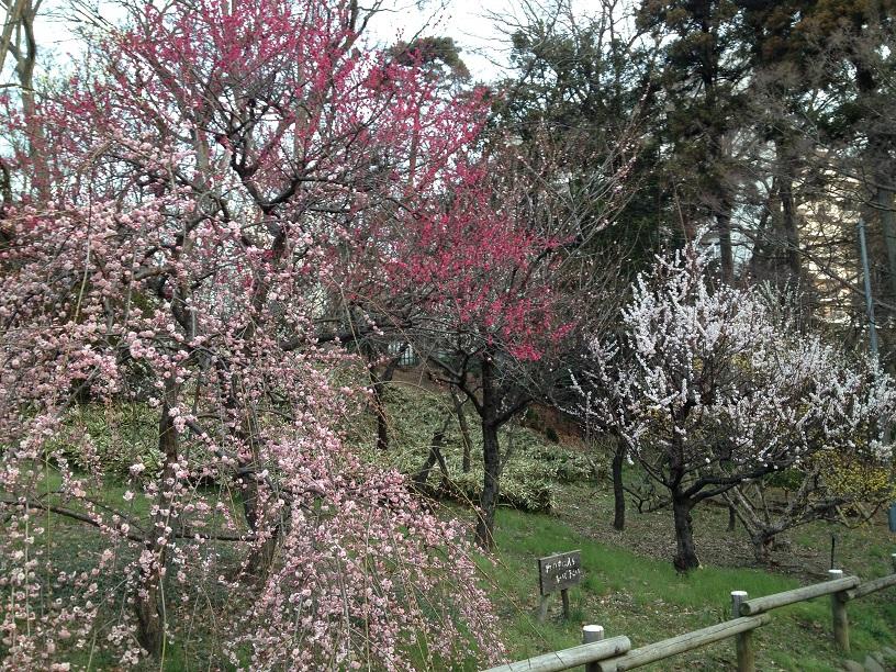 20150314_井の頭公園.jpg