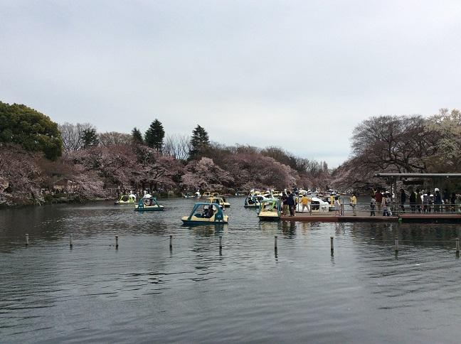 20150329_井の頭公園.jpg
