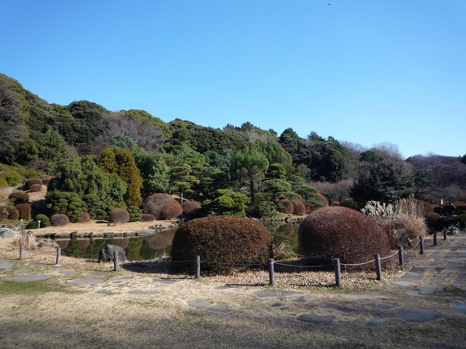 20160110_小石川植物園2.jpg
