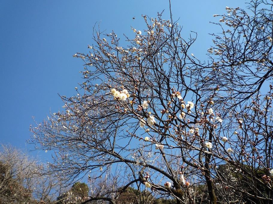 20160110_小石川植物園3.jpg