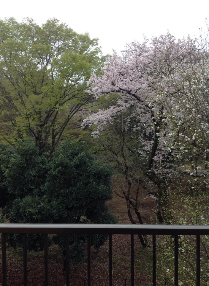 20160403_自宅の桜.jpg