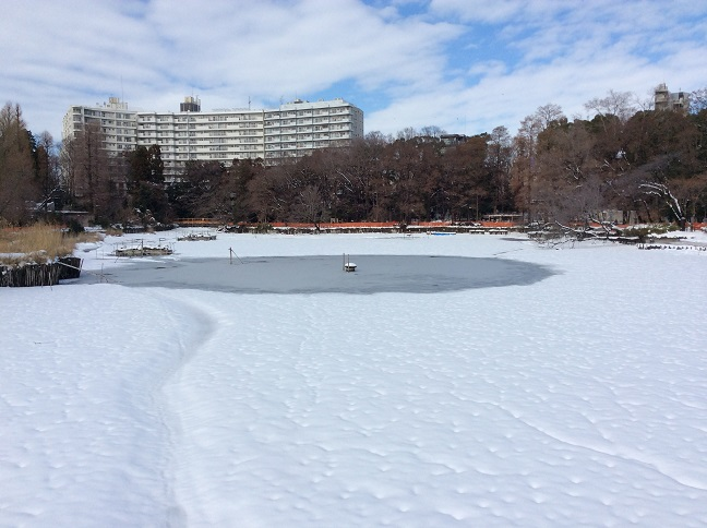 20140209大雪の翌朝1.jpg