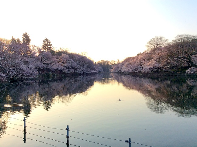 20150330_井の頭公園1.jpg