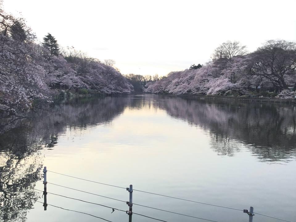 20160401_井の頭公園.jpg