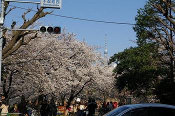 20120408_不忍池.jpg