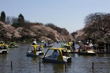 20120408_井の頭公園.jpg